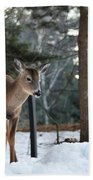 Whitetail In Woods Beach Towel