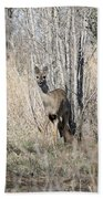 Whitetail Undercover Beach Towel