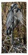 Who Is There - Great Blue Heron Beach Towel