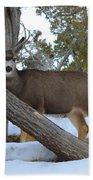 Who Me?  Oh Deer Beach Towel