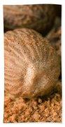Whole Nutmeg Nuts Beach Towel