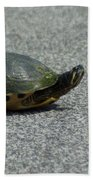 Why Did The Turtle Cross The Road Beach Towel