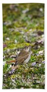 Wild Birds Hermit Thrush Beach Towel