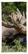 Wild Bull Moose Beach Towel