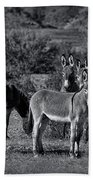 Wild Burros In Black And White  Beach Towel