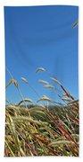 Wild Foxtail Grass In The Breeze II Beach Towel