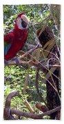Wild Hawaiian Parrot  Beach Towel