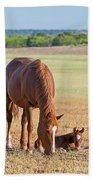 Wild Horses Mother And Baby Beach Towel