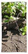 Wild Iguana Finding Shade 2 Beach Towel