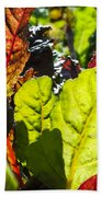 Wild Lettuce Beach Towel