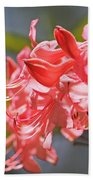 Wild Pink Azalea At Moore State Park Beach Towel