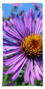 Wild Purple Aster Beach Sheet