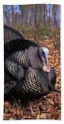 Wild Turkey Displaying Beach Towel by Len Rue Jr