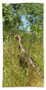 Wild Turkey In The Sun Beach Towel