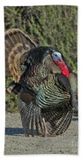Wild Turkey Tom Beach Towel