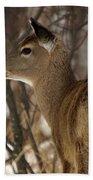 Wild White-tailed Deer Beach Towel