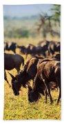 Wildebeests Herd. Gnu On African Savanna Beach Towel
