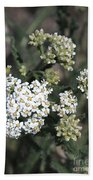Wildflowers - White Yarrow Beach Towel
