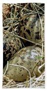 Willet Catoptrophorus Semipalmatus Eggs Beach Towel