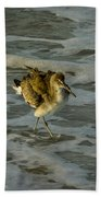 Willet Washing 1 Beach Towel