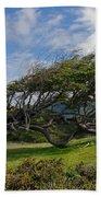 Wind-bent Tree In Tierra Del Fuego Patagonia  Beach Towel