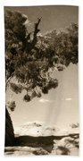 Wind Swept Tree Beach Towel