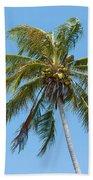 Windblown Coconut Palm Beach Towel