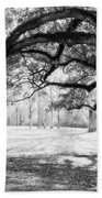 Window Oak - Bw Beach Towel
