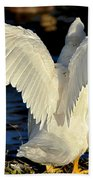 Wings Of A White Duck Beach Towel