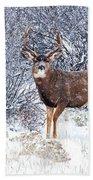 Winter Buck Beach Towel by Darren  White
