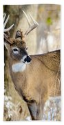 Winter Buck Beach Towel by Steven Santamour