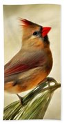 Winter Cardinal Beach Towel