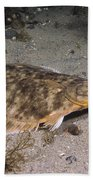 Winter Flounder Beach Towel