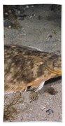 Winter Flounder Beach Sheet