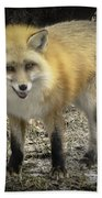 Winter Nature At Howell Nature Center Beach Towel