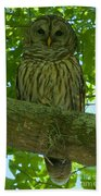 Winter Park Owl Beach Towel