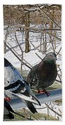 Winter Pigeon Party Beach Towel