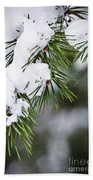 Winter Pine Branches Beach Towel