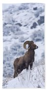Winter Ram Beach Towel