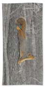 Winter Squirrel Beach Towel