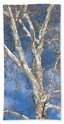 Winter Sycamore Beach Towel