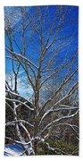 Winter Tree On Sky Beach Towel