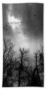 Winter Trees Moving Sky Beach Towel