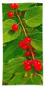 Winterberry Along Rivier Du Nord Trail In The Laurentians-qc Beach Towel