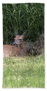 Wisconsin Doe Resting Beach Towel