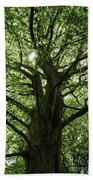Witness Tree Beach Towel