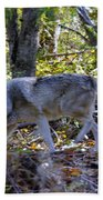 Wolf In The Woods Beach Towel