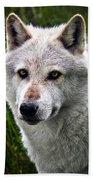 Wolf Alpha Male Beach Towel