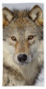 Wolf Face To Face Beach Towel
