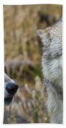 Wolf Glare Beach Towel